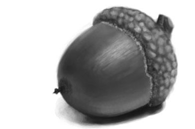 acorn_texture_30mins