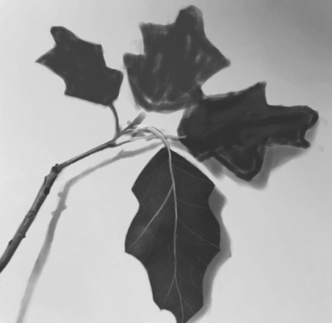 leaf_texture_30min